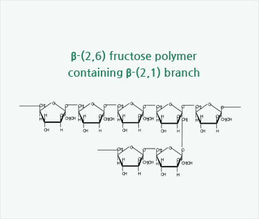 b-(2,6) fructose polymer containing b-(2,1) branch
